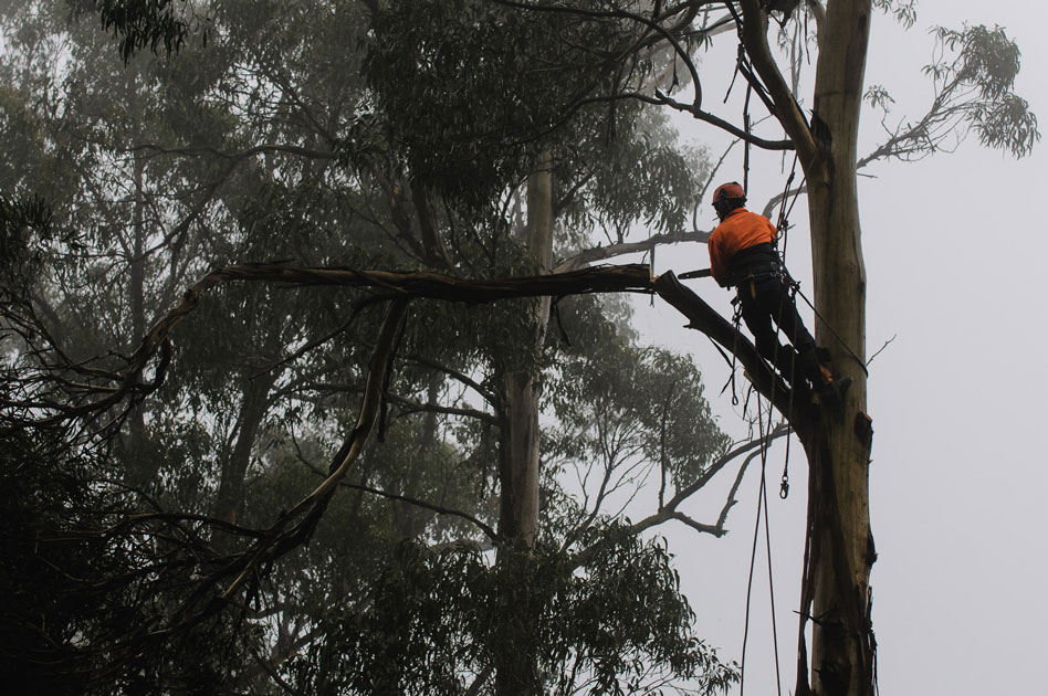 You don't have to be an arborist to understand the value of trees