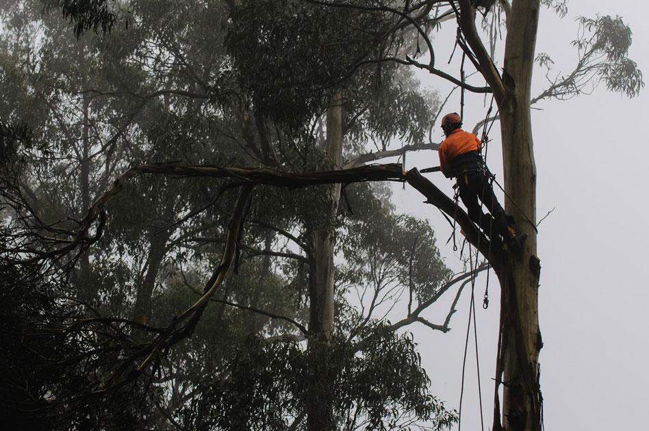 Plant trees, create jobs
