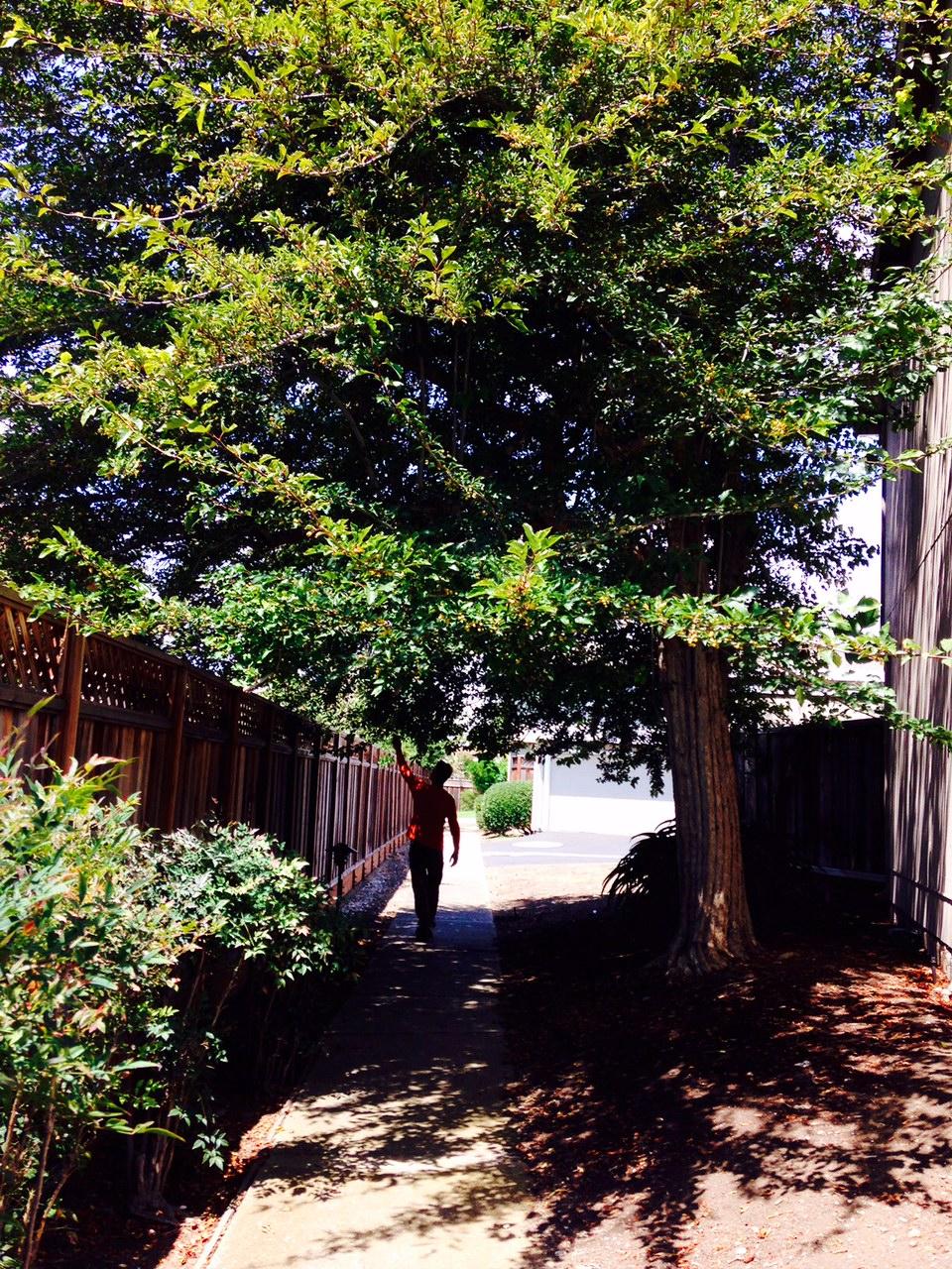 Blendan_tree
