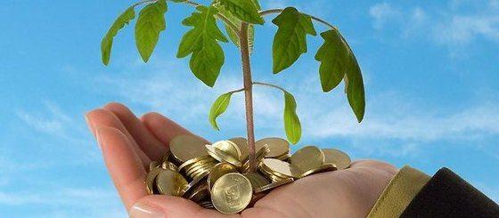 Why you should treat trees like money