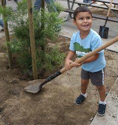 Tree planting 228