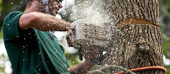 Top 5 Signs You Need a Certified Arborist