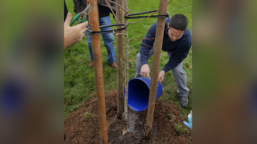 Cosumnes-CSD-Tree-Steward-Workshop2