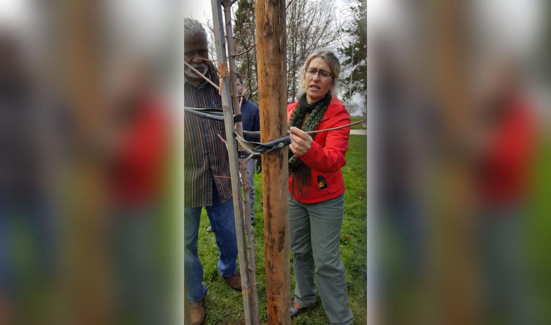 Cosumnes-CSD-Tree-Steward-Workshop5