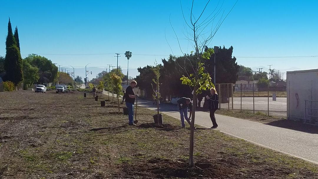 Upland-Planting9